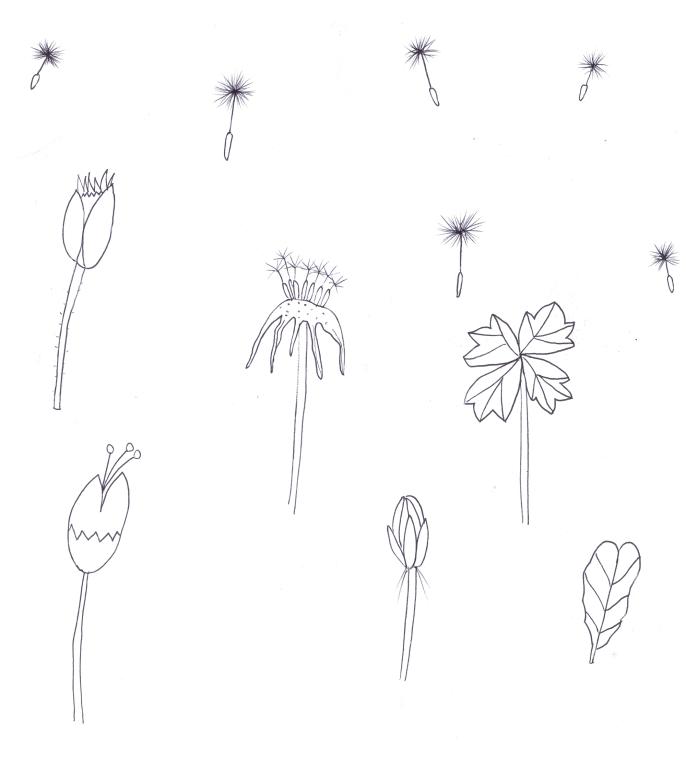 flores transparente